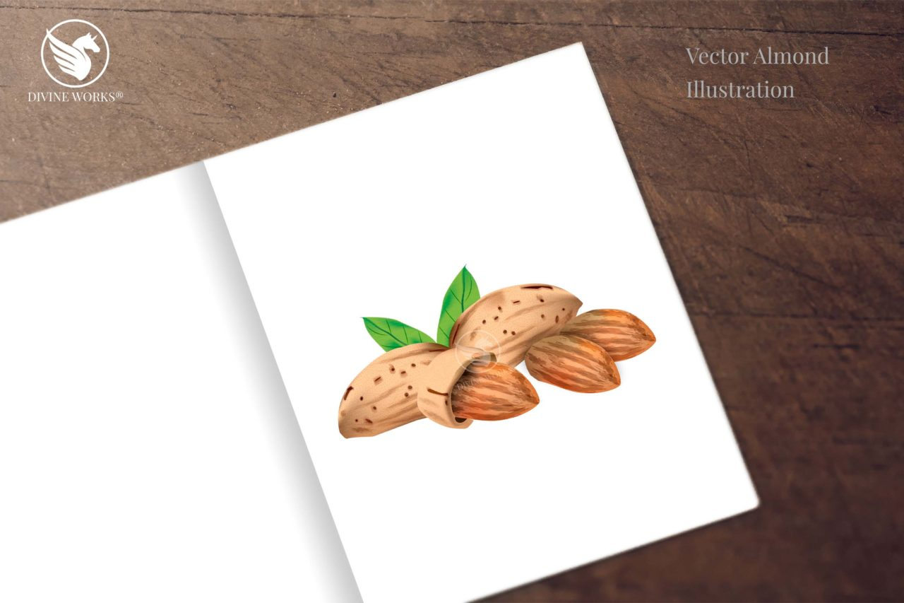 Almonds digital illustration