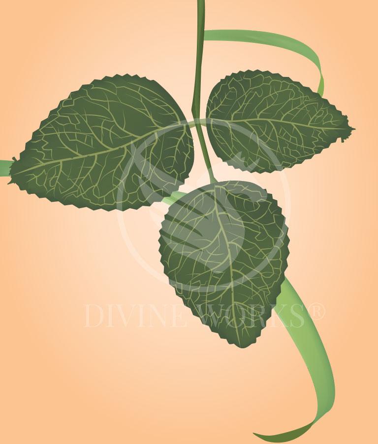 Free Green Leaf Vector Illustration