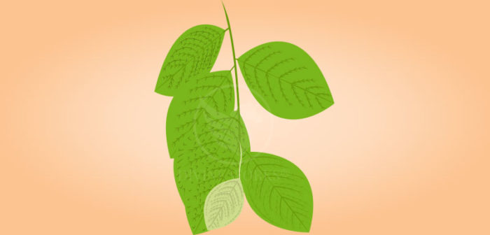Free Green Leaf Vector Illustration Download by Divine Works