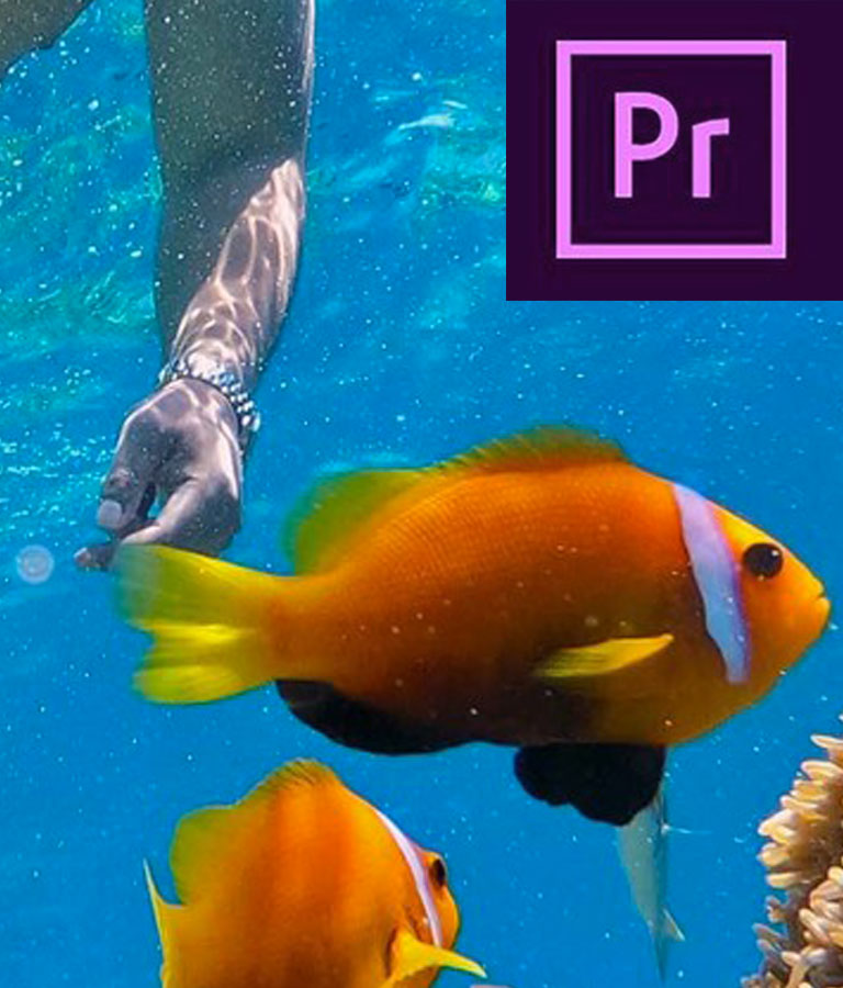Adobe Premiere CC 2019 - Quick Start Zero To Hero