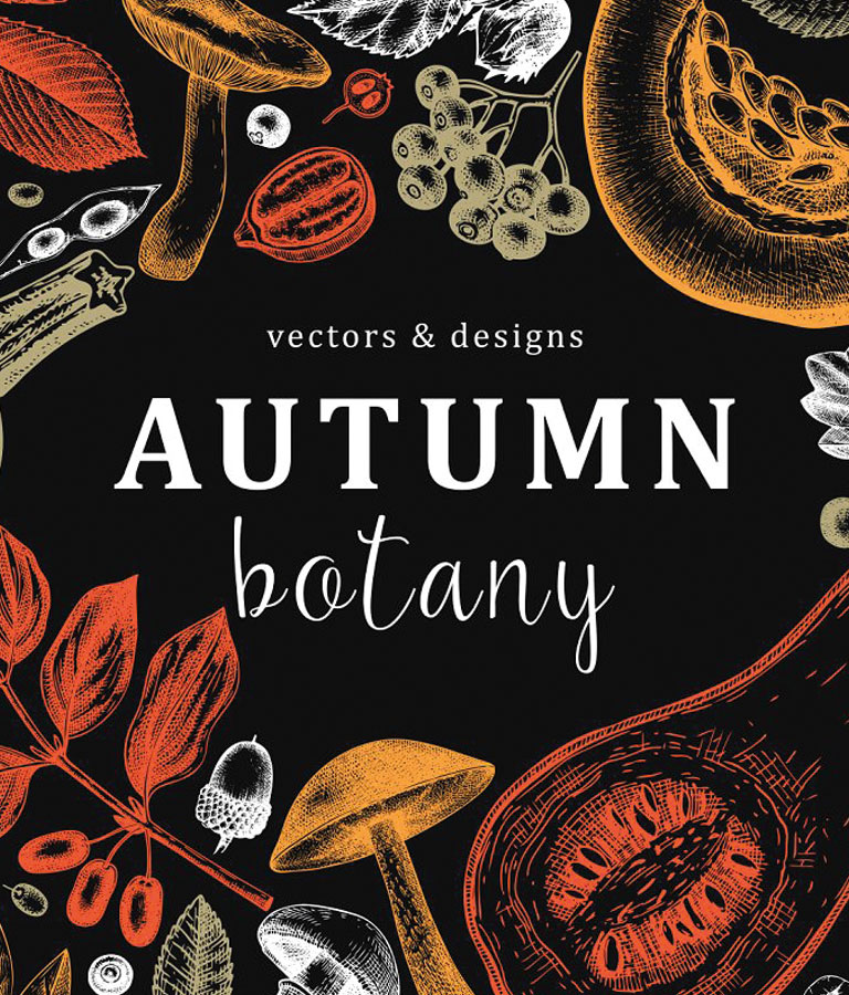 Autumn Botany Vectors & Designs