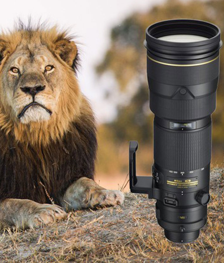 Wildlife Photography for Beginners and Amateurs