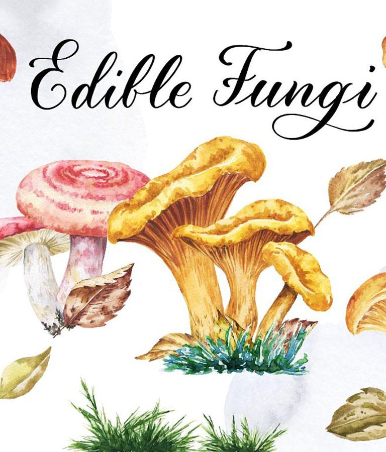 Watercolor Edible Mushrooms