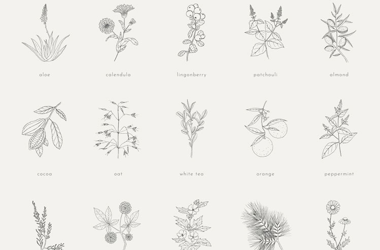 Plants, herbs, nuts & fruits pack