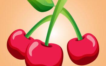 Cherry Fruit Vector Illustration